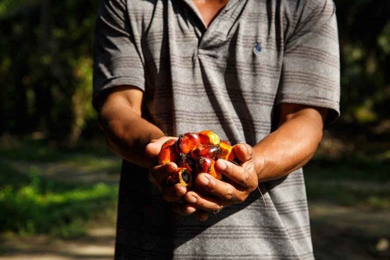 Let's Push For Sustainable Palm Oil, Here's Why It Matters