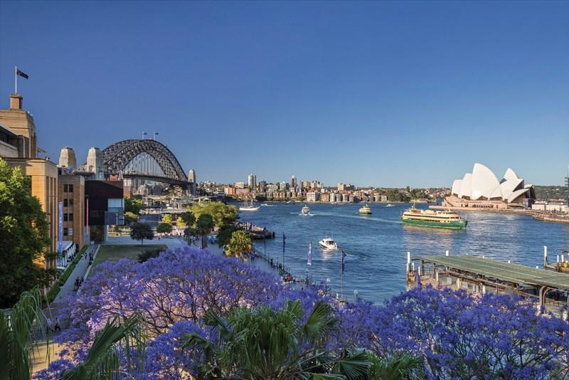 Best Places to take Insta-worthy Shots of Sydney's Jacaranda Trees